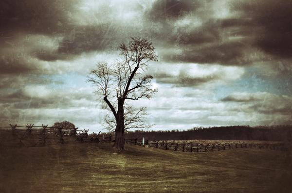 Battlefield tree